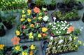 Tavasz a szenci piacon