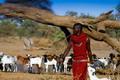 Halkó Petra: Európaiak uralják Afrikát
