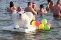 Jegesmedvék fürdése